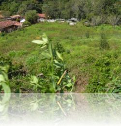 Imoveis Campos do Jordão - Terrenos - Venda - Colinas Do Imbiry
